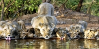 WILDLIFE OF GUJARAT